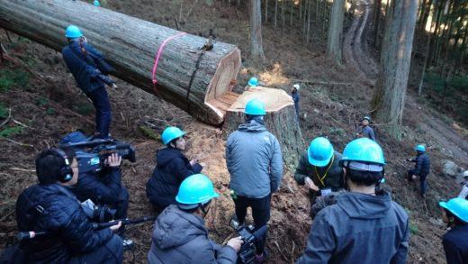 奈良の木見学ツアー②