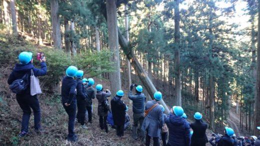 奈良の木見学ツアー①