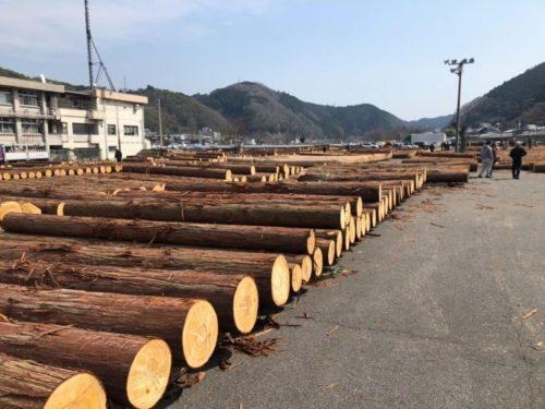 原木市場開催