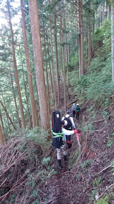 樹齢250年の森2