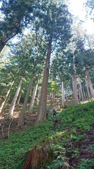 樹齢250年の森