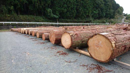 北村林業特別市