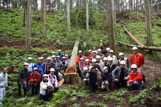 伐採見学1